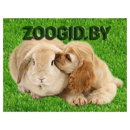 Лакомство для собак Green Qzin ПАЛТУС (Сушеное мясо палтуса) 750гр c ОМЕГА 3