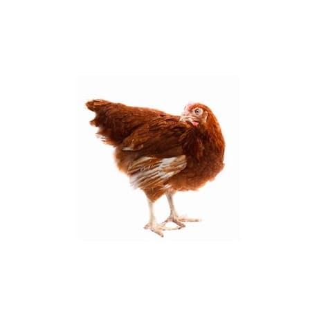ПК-1-15 для кур яичных кроссов свыше 40 до 60 недель включительно 10 кг