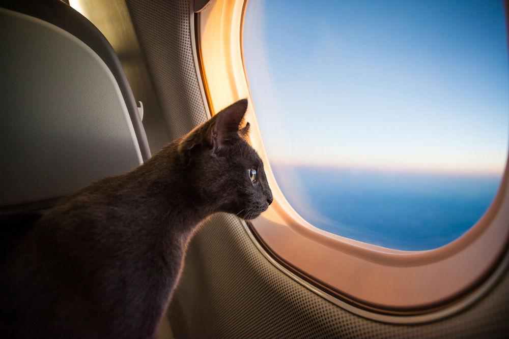 кот в самолете