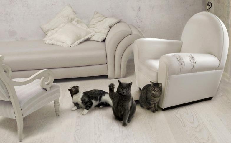 приучить к когтеточке кота