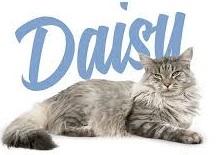 корм для котов daizy