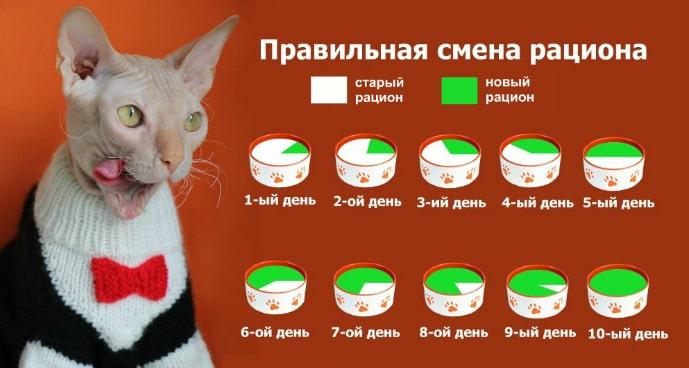 приучить кота к корму