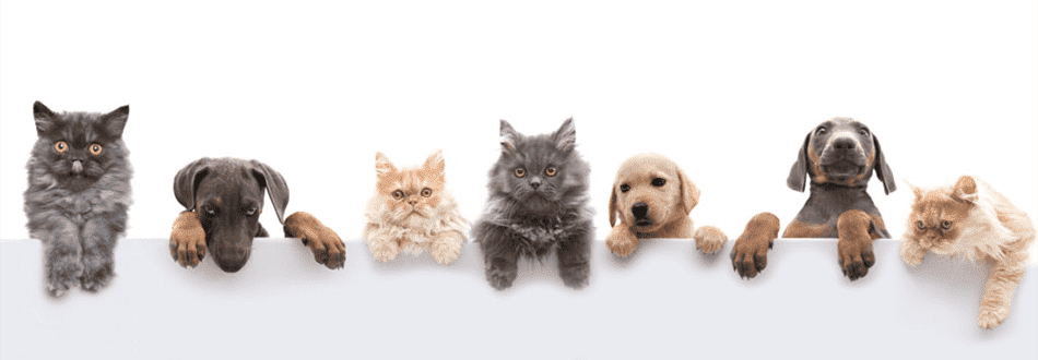 корм для животных с доставкой